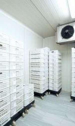 Manutenção camara frigorifica RJ